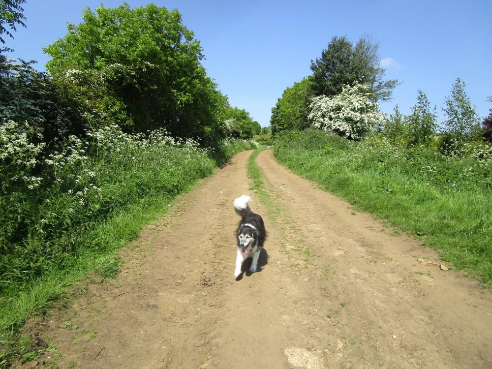 Spratton dog-friendly pub and dog walk, Northamptonshire - Dog walks in Northamptonshire