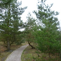 Boundary Wood dog walks, Nottinghamshire - Dog walks in Nottinghamshire