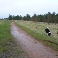 Boundary Wood dog walks, Nottinghamshire - Image 4