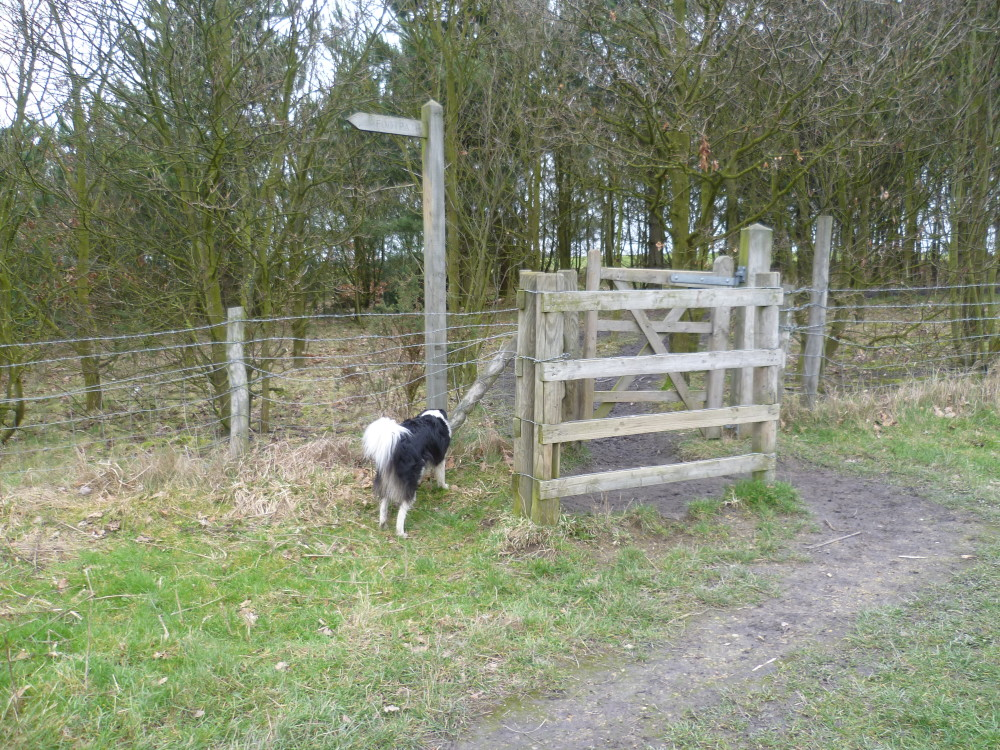 A617 Woodland dog walks, Nottinghamshire - Dog walks in Nottinghamshire