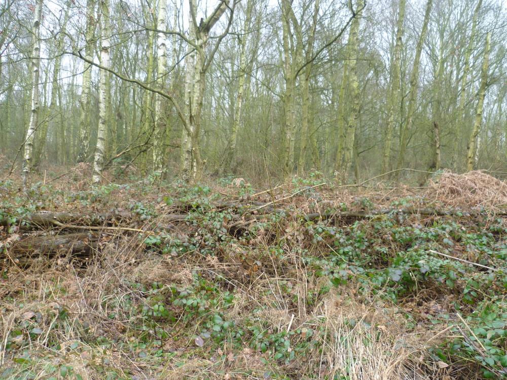Sellers Wood, Nottingham, Nottinghamshire - Dog walks in Nottinghamshire