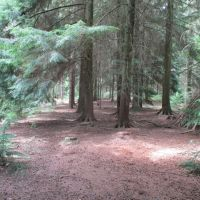 A358 Dog-friendly pub and dog walk, Somerset - dog walk in the forest.JPG