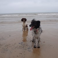 Bridlington South Beach with dogs, Yorkshire - Dog walks in Yorkshire