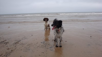 Bridlington South Beach with dogs, Yorkshire - Driving with Dogs