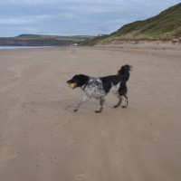 Saltburn dog-friendly beach, North Yorkshire - Dog walks in Yorkshire