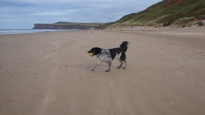 Saltburn dog-friendly beach, North Yorkshire - Driving with Dogs