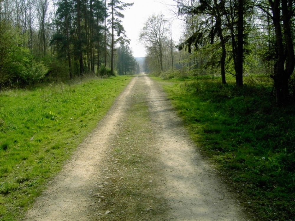 Chicksands Wood dog walk, Bedfordshire - Dog walks in Bedfordshire