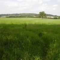 M4 - Chieveley Services with dog walk, Berkshire - Dog walks in Berkshire