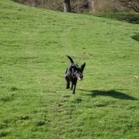 Riverside dog Walk, Worcestershire - E8AA2DC0-FA05-47B8-A46F-631F042F3B12.jpeg