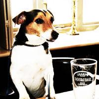 Dog-friendly pub, dog walks and holiday cottage, Somerset - somerset dog-friendly pubs and rooms.jpg