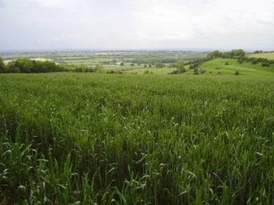 M4 Junction 18 Cotswold Way dog walk, Gloucestershire - Driving with Dogs