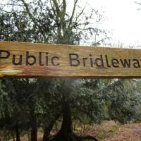 A25 woodland dog walk near Dorking, Surrey - Surrey dog walks and dog-friendly pubs.JPG