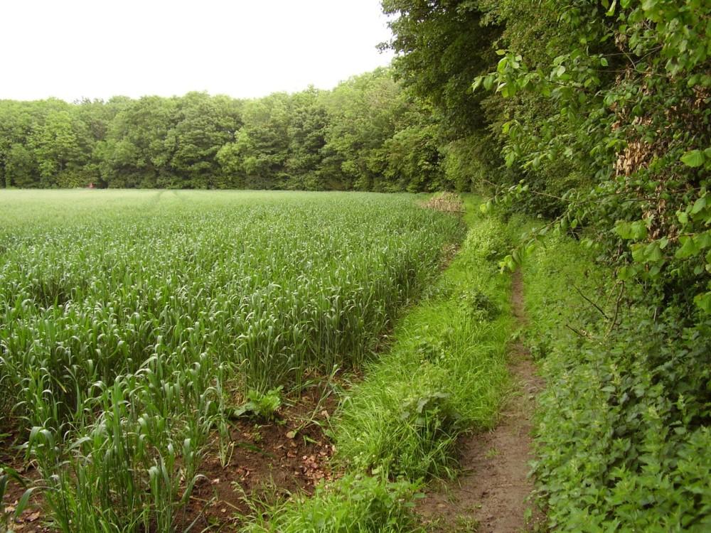 M4 Junction 18 Cotswold Way dog walk, Gloucestershire - Dog walks in Gloucestershire