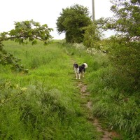 M4 Junction 18 Cotswold Way dog walk, Gloucestershire - Dog walks in Gloucestershire