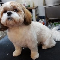 Hair & Hounds Dog Grooming, Bristol, Somerset - hairandhounds.jpg