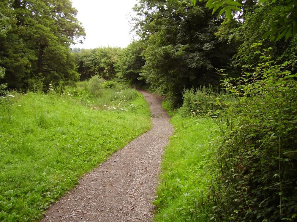 M4 junction 27 dog walk near Newport, Wales - Dog walks in Wales
