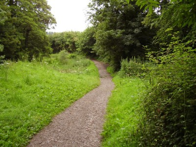 M4 junction 27 dog walk near Newport, Wales - Driving with Dogs