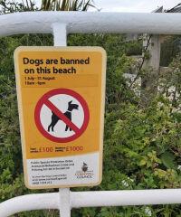 Scenic Beach and Marina (seasonal access for dogs), Cornwall - 20210429_130628.jpg