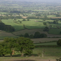 Marshwood Vale dog walk and dog-friendly B&B, Dorset - dog walking in Marshwood Vale.jpg