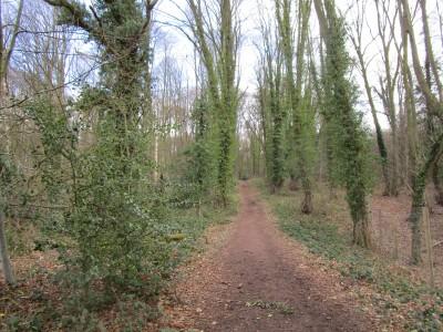 Woodland walk and dog-friendly pub near Shrawley, Worcestershire - Driving with Dogs