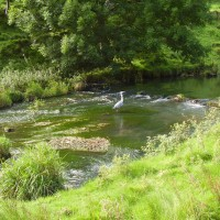 Alstonefield dog walk and dog-friendly pub, Derbyshire - Peak District dog walk and dog-friendly pub