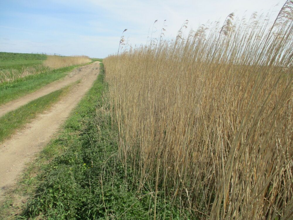 Exploring the fens with the dog near Peterborough, Cambridgeshire - Dog-friendly walk and pub in the Fens.JPG