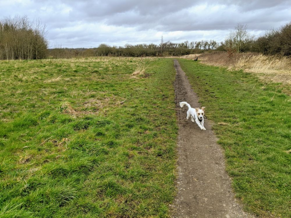 Local Dog Walk: Wheatacre Woods, Lancashire - IMG_20200307_141134.jpg