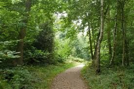 Woodland dog walk and dog-friendly pub, Essex - Essex woodland dog walk and dog-friendly pub.jpg