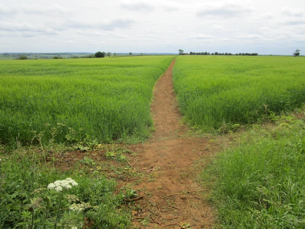 M40 Jct 11 Dog-friendly dining and dog walk near Banbury, Oxfordshire - Oxfordshire dog-friendly pubs and dog walks.JPG