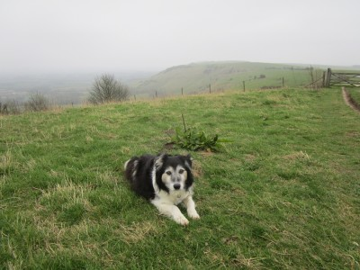 A273 Beacon walk and dog-friendly pub, East Sussex - Driving with Dogs