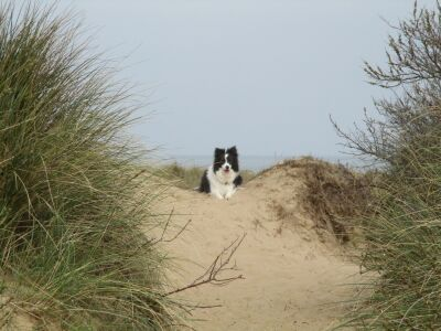 Holme next the sea dog-friendly beach, Norfolk - Driving with Dogs