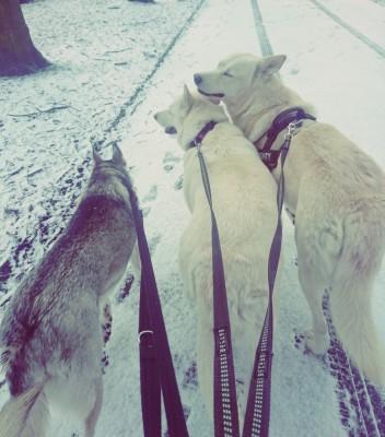 SunriseWataha - Driving with Dogs