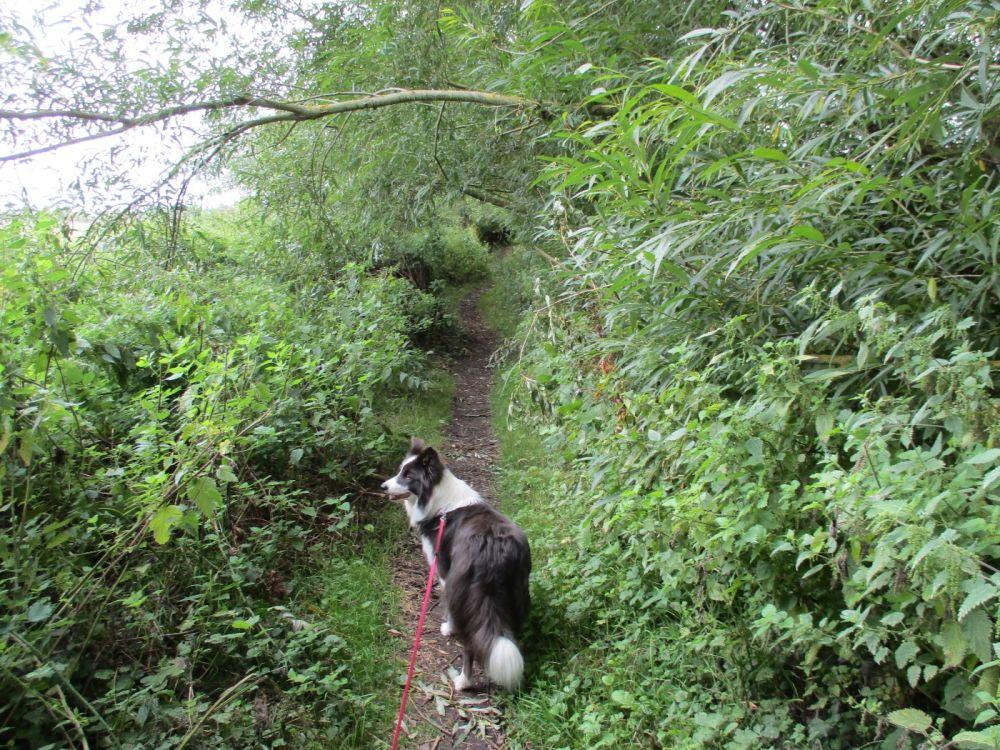 Dog-friendly pub and dog walk near Didcot, Oxfordshire - Dog walk in Oxfordshire.JPG