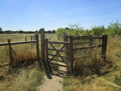 Near Henley on Thames dog walk and dog-friendly pub, Oxfordshire - Driving with Dogs