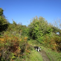 Stunning dog walk and dog-friendly beach, Pembrokeshire, Wales - IMG_5892.JPG