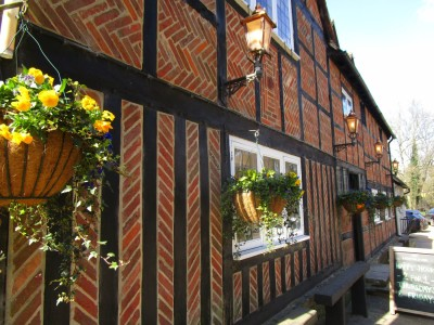 A286 country dining and dog walk near Haslemere, West Sussex - Driving with Dogs