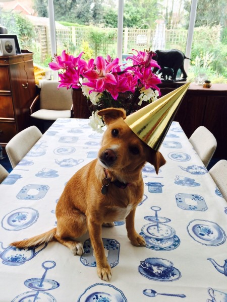 Honey's first birthday party!