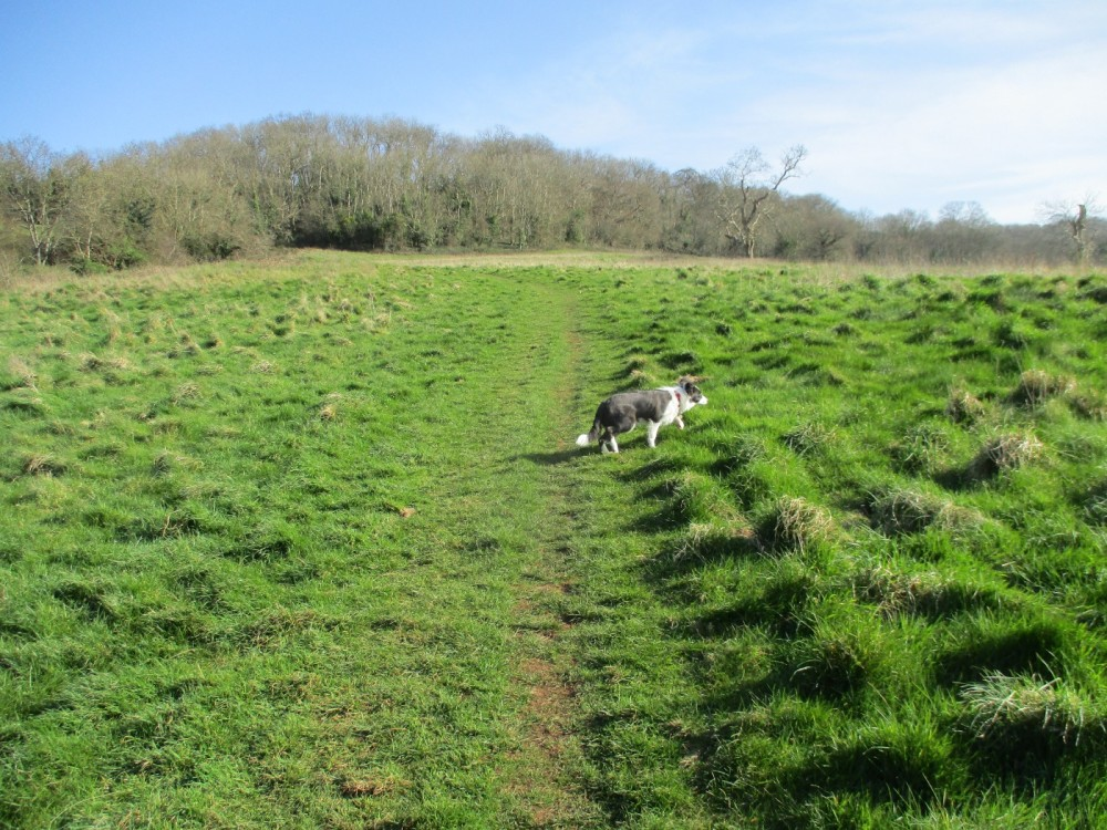 A39 Wookey for Woofers, Somerset - Dog walks in Somerset.JPG