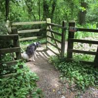 A377 dog-friendly pub and dog walk, Devon - Devon dog walk and dog-friendly pub.JPG