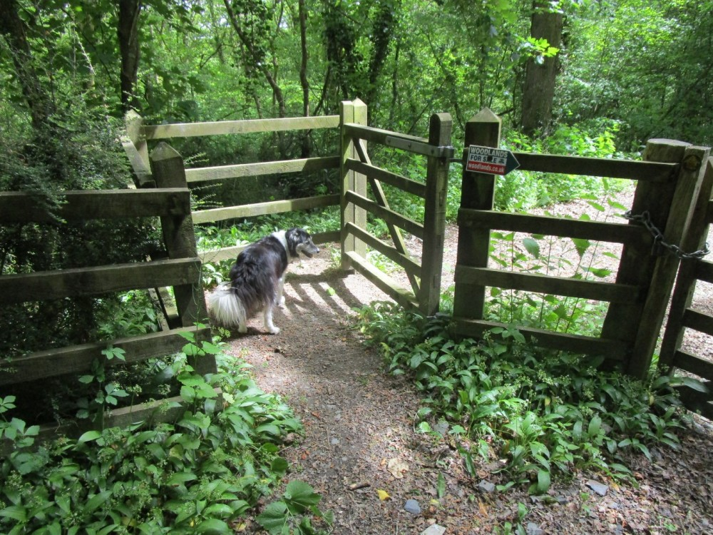 A377 dog-friendly pub and dog walk, Devon - Devon dog walk and dog-friendly pub.JPG