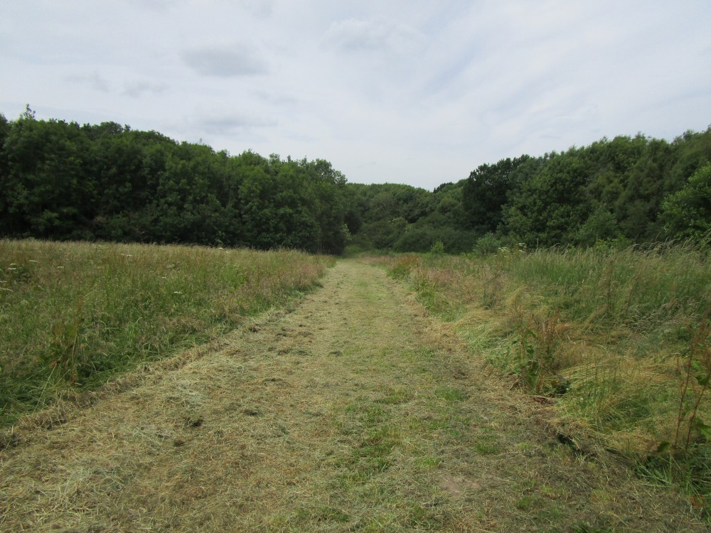 National Forest dog walk near Ratby and dog-friendly pub, Leicestershire - Leicestershire dog walk with dog-friendly pub