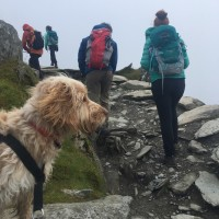Walking Snowdon with your dog1.jpg