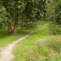 A3 Junction 2 woodland dog walk, Hampshire - Dog walks in Hampshire