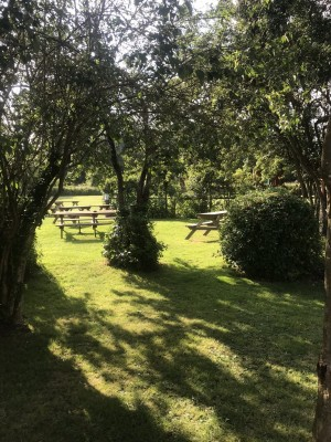 A10 dog-friendly refreshment and dog walk, Hertfordshire - Driving with Dogs