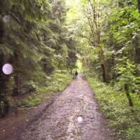 M4 junction 34 dog walk near Cardiff, Wales - Dog walks in Wales