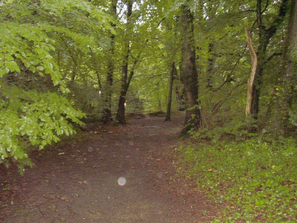 M4 junction 36 dog walk near Bridgend, Glamorgan, Wales - Dog walks in Wales