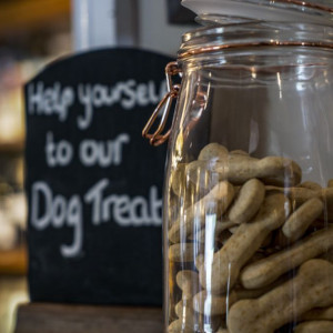 Dog-friendly country dining and dog walk in the Chess Valley, Hertfordshire - Driving with Dogs
