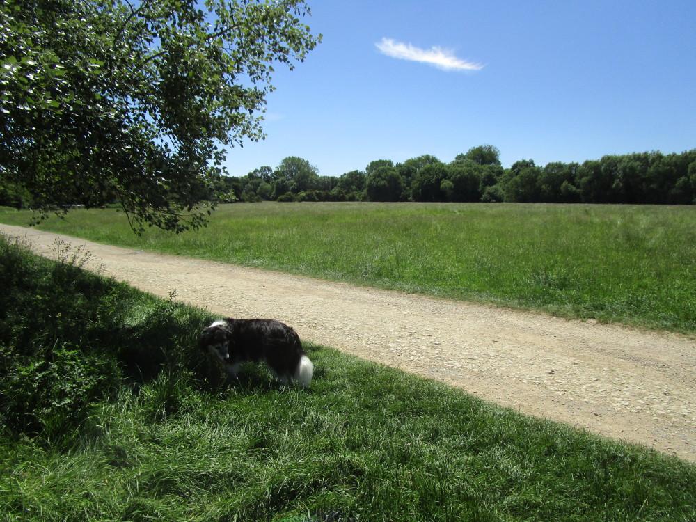 A34 near Oxford dog walk and dog-friendly inn, Oxfordshire - Dog walks in Oxfordshire
