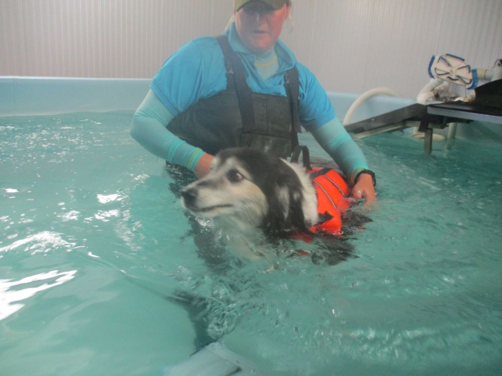 A guide to starting hydrotherapy with your dog