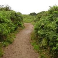 M4 junction 37 dog-friendly beach and walk near Porthcawl, Glamorgan, Wales - Dog walks in Wales